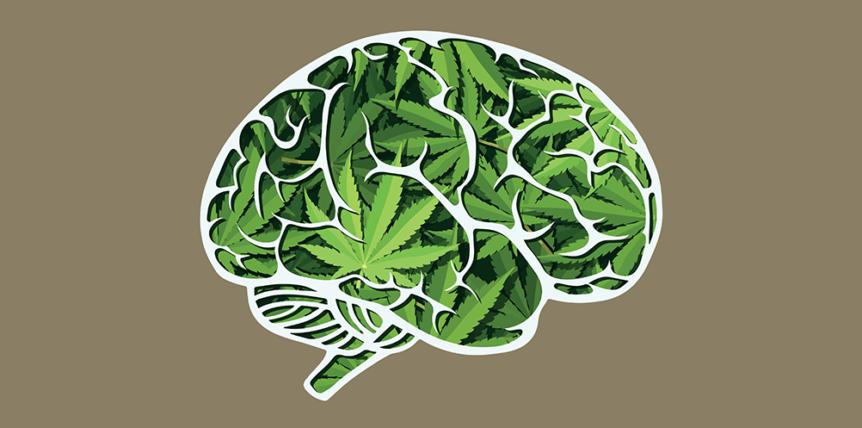 marihuana w mózgu